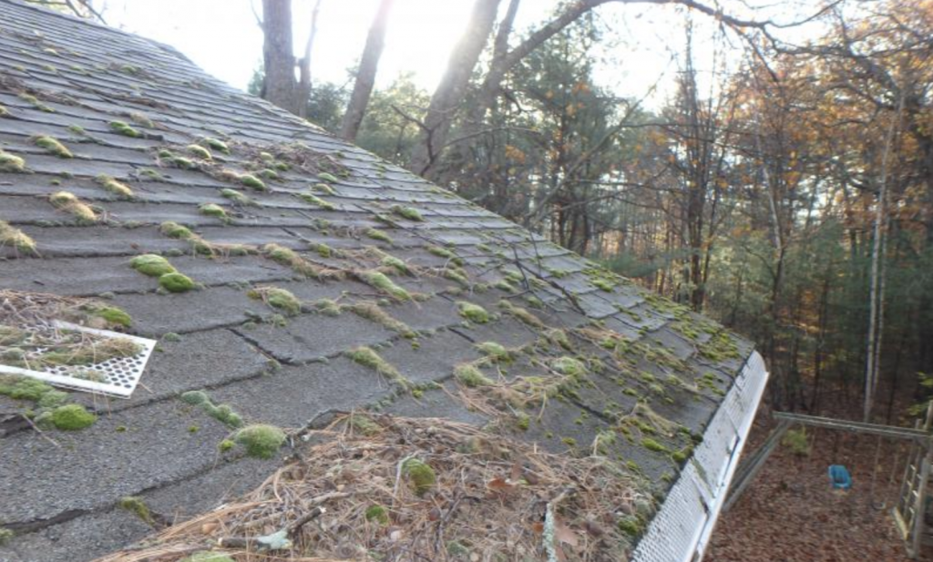Roof Cleaning in Princeton