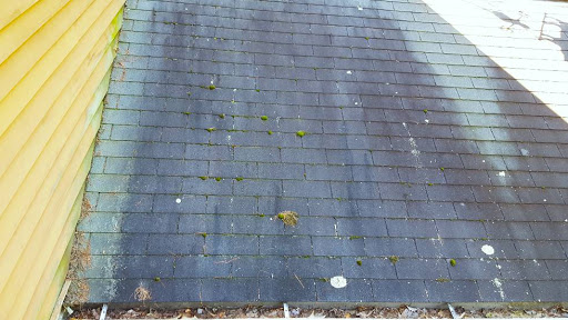 Freehold Roof Cleaning